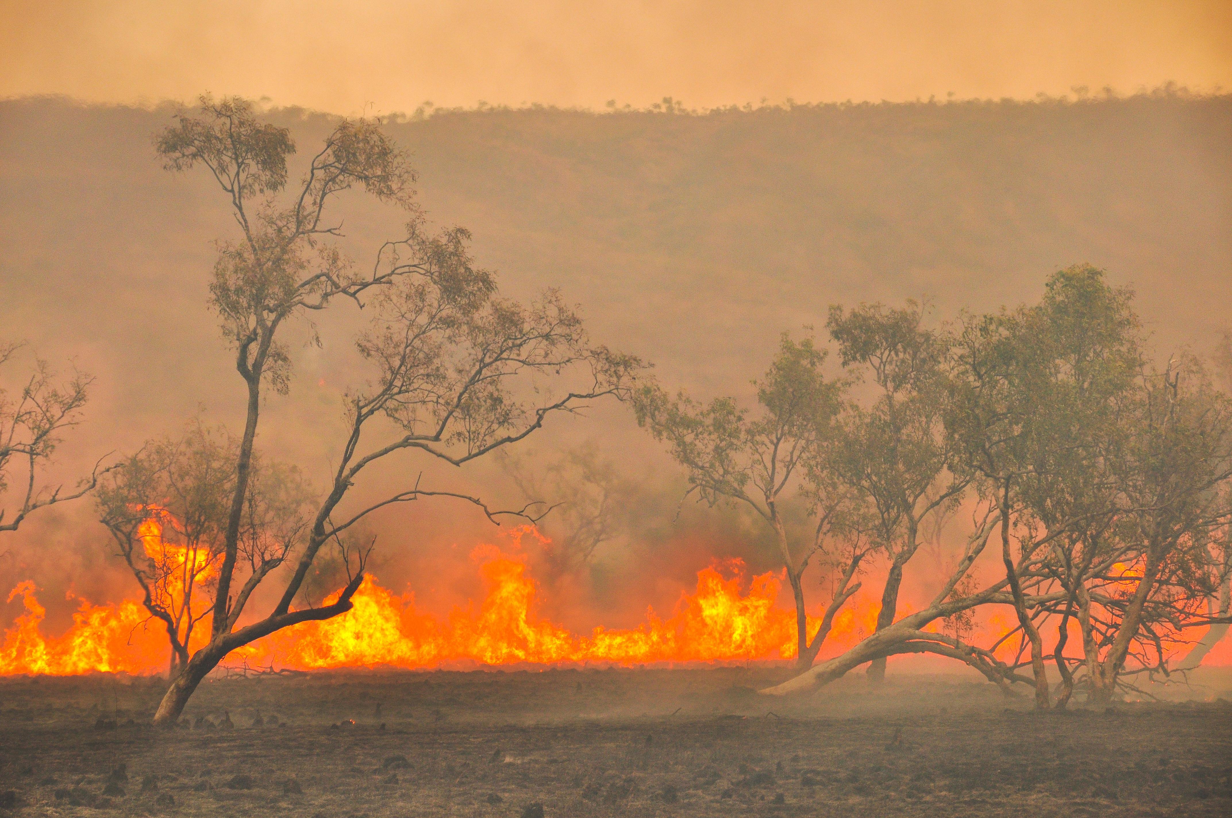 Australian Bushfires | Holman Webb Lawyers
