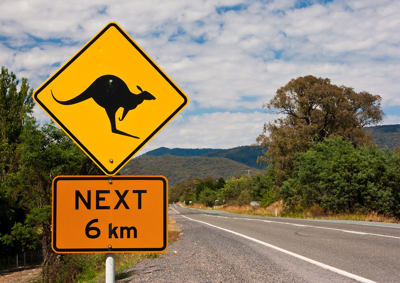 Is that you Skip? AFCA Backs Insurers in Claims Involving Alleged Collisions with Marsupials